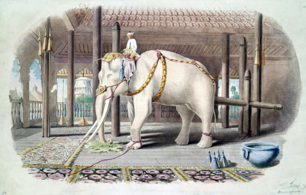 Lord_White_Elephant